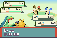 Pokemon Emerald - Battle  - take some seeds u stupid plusle - User Screenshot