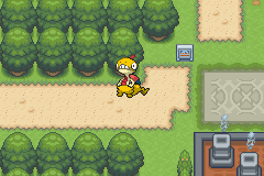 Pokemon Light Platinum - Misc  -  GO AWAY SCRAGGY! - User Screenshot