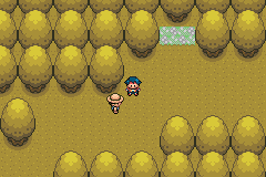 Pokemon Platinum - Location Gold Woods - Hey man. What r we looking at? - User Screenshot