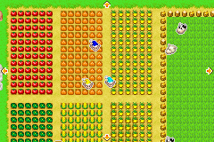 Harvest Moon - More Friends of Mineral Town - My Perfect Farm!!!!!!! - User Screenshot