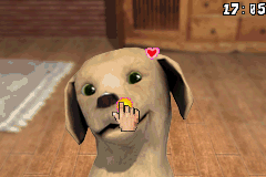 Paws & Claws - Best Friends - Dogs & Cats - Location Petting - boop that nose! - User Screenshot