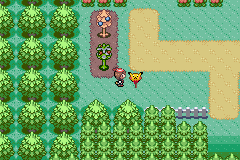 Pokemon Snakewood - Location Route  - OH my GOD PICKACU NOOOOOOOOO :( - User Screenshot