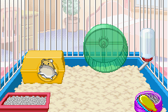 Petz - Hamsterz Life 2 - peekaboo - User Screenshot