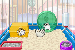 Petz - Hamsterz Life 2 - hello! - User Screenshot